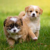 puppy training jonge honden training