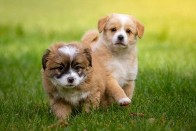 puppy training jonge honden training
