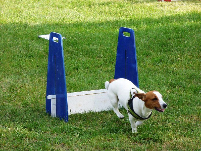 honden training Gehoorzaamheid niveau 2