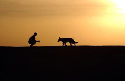 cursus Hier komen wereldhond