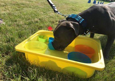 training honden buiten water